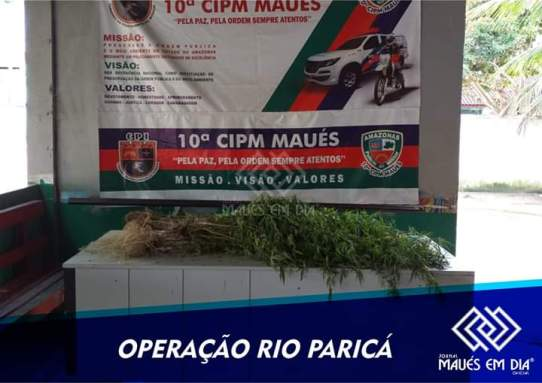maconha curuça 01.03,2019